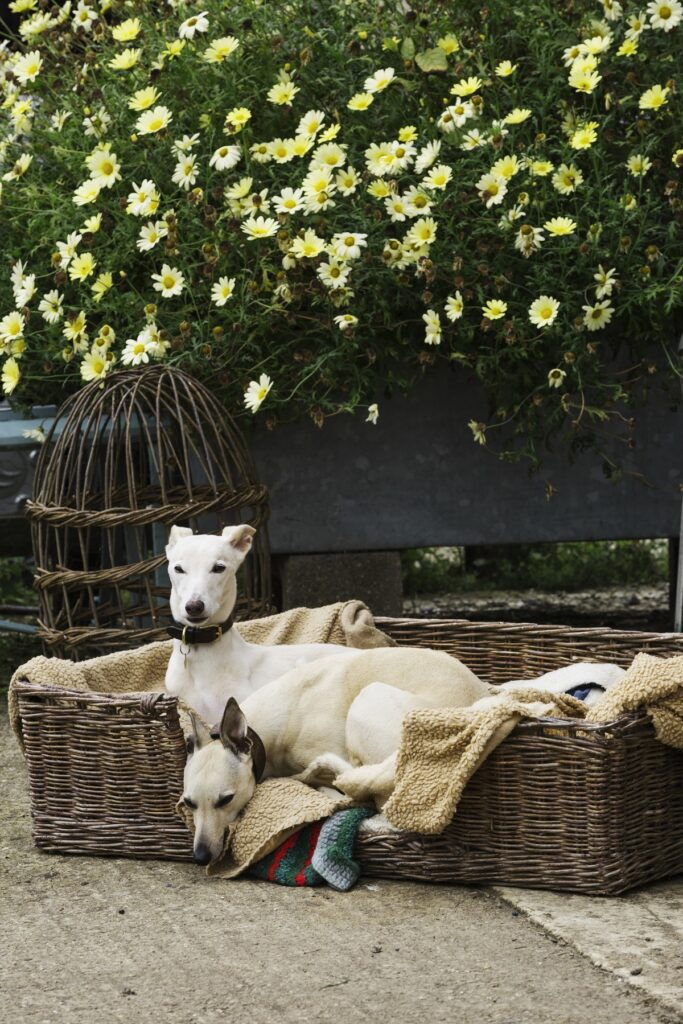 Eco Dog Bed